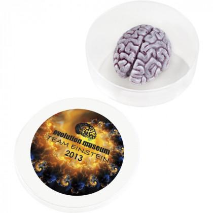 Splatter Brain in a Dish
